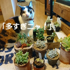 ガーデン/猫好き/猫/多肉植物/多肉植物寄せ植え/多肉/... 日曜日 息子ちゃん連れて 多肉屋さんへ …