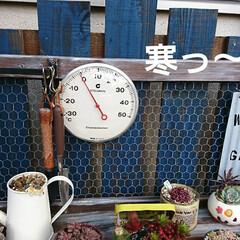 ガーデン/ピンクフリル/乙女心/多肉/多肉植物 寒いですねぇ こちらは西日本なので 昨日…