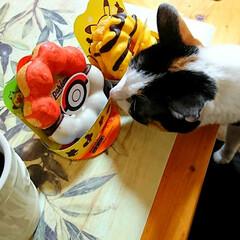 猫好き/ねこ/猫/3時のおやつ/ポケモン/Pokemon/... これほしいにゃん❤️  今日は人間ドック…