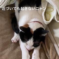 猫好き/ネコ 連投失礼します。  うちのニャンコは 猫…(2枚目)