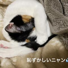 猫好き/ネコ 連投失礼します。  うちのニャンコは 猫…(3枚目)
