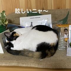 猫好き/猫 寒いですねぇ〜😵  西日本で こんなこと…(3枚目)