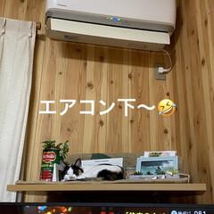 猫好き/猫 寒いですねぇ〜😵  西日本で こんなこと…(2枚目)