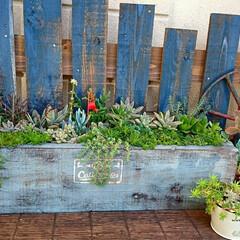 ガーデン/多肉植物のある暮らし/多肉植物/多肉/DIY 寒いですねぇ~ ガーデンには 車輪でしょ…