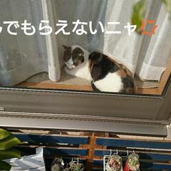 猫好き/猫/葉挿し/ガーデン/桃太郎/多肉/... 寒い朝でしたが、Lierさんの動画に刺激…