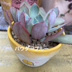 多肉植物寄せ植え/多肉植物 連投失礼します。 沢山増えた葉挿しっ子 …(3枚目)