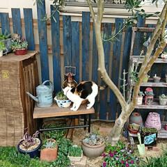 ガーデン/ねこ/猫好き/多肉植物棚/多肉植物/多肉/... 多肉病f(^_^)な週末  金曜日は 職…