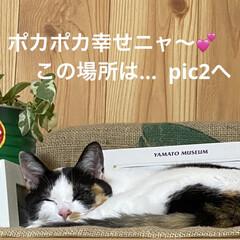 猫好き/猫 寒いですねぇ〜😵  西日本で こんなこと…
