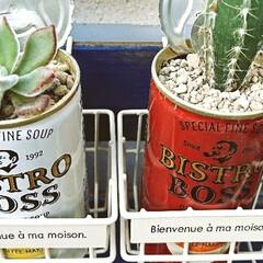 ガーデン/サントリーボス/空き缶アレンジ/リサイクル/多肉植物がある暮らし/多肉植物/... お気に入りのBOSS カン 発見‼️ 今…