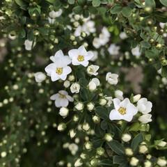 はじめてフォト投稿/風景 可愛いお花