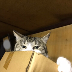 猫派 実家の猫、キキです。ここは仏壇の上😅一番…