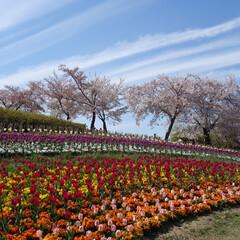 はじめてフォト投稿/風景 奈良県 馬見丘陵公園