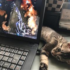 猫派/にゃんこ同好会 PCを、触ろうとすると必ず邪魔しにきます。