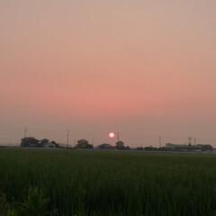 「#夏のお気に入り」/夏のお気に入り 夏の朝、清々しい空気の中で散歩です。薄暗…