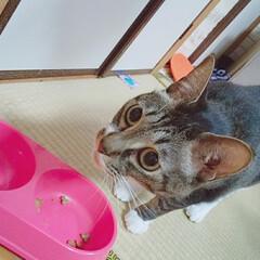 犬猫以外もいいぞ派/フォロー大歓迎 1歳3.4ヶ月の桜と4歳7ヶ月の小春です!(7枚目)