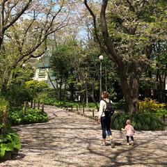 景色癒し 桜 の 絨毯   🌸✨