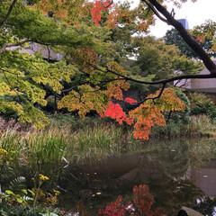 景色が好き/お散歩/秋の景色 令和の提灯 覚えてますか ???  仕事…