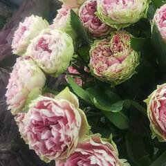 ボトルフラワー/ドライフラワー/ハンドメイド 大切な方から託された 珍しい薔薇の花 ボ…(3枚目)
