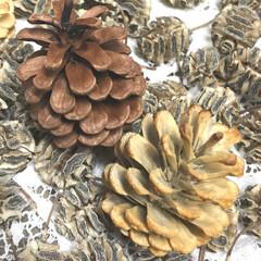 クリスマスインテリア/木ノ実ブリーチ/木ノ実/ハンドメイド 松ぼっくり & チビ木ノ実 そのまんま …
