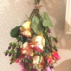 ドライフラワー/ドライフラワーのある暮らし/雑貨 以前アップした 薔薇だけにバラ売りの薔薇…(2枚目)