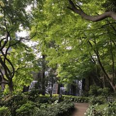 景色癒し/散歩 去年の 御殿山庭園 覚えてますか ???…