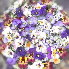 至福のひととき/ガーデニング/春の花/花のあるくらし お庭 の ビオラちゃんたち   もう 季…