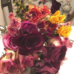 ドライフラワーのある暮らし/花のある暮らし シリカゲルの中で 放置されていた 薔薇🌹…