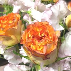 至福なひととき/花のあるくらし/フレッシュフラワー 🎼〜  春色の汽車に乗って    ♪♪♪…
