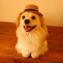 犬派/はじめてフォト投稿/フォロー大歓迎/LIMIAペット同好会/わんこ同好会/愛犬/... 夏はもうすぐそこ!!