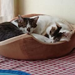 保護猫/猫クラブ すっかり、馴染んだ末っ子マーチ💕 ライト…