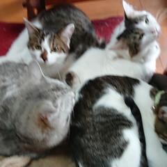 保護猫/猫クラブ すっかり、馴染んだ末っ子マーチ💕 ライト…(2枚目)