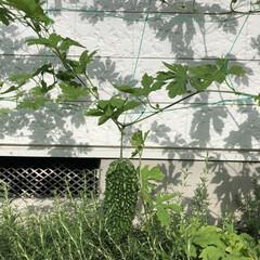夏対策 おはようございます☀ 我が家の二本のゴー…
