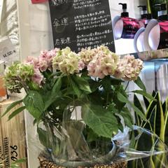 紫陽花/暮らし 6月6日くもり 昨日美容院の帰りに見つけ…