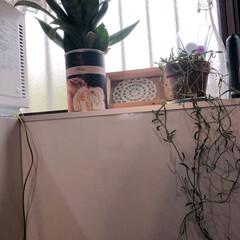 ダイソー/100均/キッチン/住まい/暮らし/リビングあるある レンジの横のスペースに ダイソーで買った…