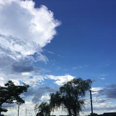 景色/お散歩空🐾/夏の空☁️/フォロー大歓迎/風景/暮らし 夏の空に癒される〜♫♩  昼の空と夕方の…
