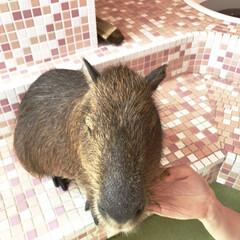 小動物可愛い 可愛い小動物❤️ 夏バテしないでね💦