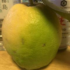レモン レモン  頂きました。   めちゃくちゃ…(3枚目)