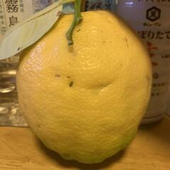 レモン レモン  頂きました。   めちゃくちゃ…