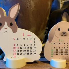 うさぎ/カレンダー ふぅちゃんに❗️って 貰ったプレゼントに…