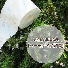 雑貨/トイレ/トイレットペーパー/トイレグッズ/丸富製紙/生活雑貨/...