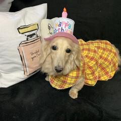 わんこ同好会/LIMIAペット同好会/犬/愛犬/ペット/繁殖引退犬/... 今年2月に我が家に迎えた保護犬 ビハク …