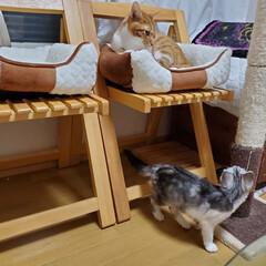 猫のいる生活/猫好き/猫部/猫のいる暮らし/猫と暮らす/猫屋敷/... 今日も雨降り 外部屋は諦め 家の中で遊ん…