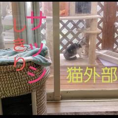 犬のいる暮らし/犬との暮らし/犬と暮らす/いぬ/猫との暮らし/猫の家/... 犬は外で遊び  猫達は外部屋で日向ぼっこ🏡