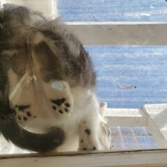 保護猫/肉球/こねこ/ねこ/住まい/暮らし 今日は風が強く 風で杉の葉が飛んで来て …