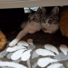 ネコ/猫のいる暮らし/猫好きさんと繋がりたい/猫と暮らす/ねこ 仲良し グランと はにや💓💞  今日は …