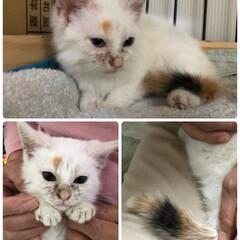 家族増えた/子猫 ちょ〜小さい(⑅•ᴗ•⑅)°♡  名前は…