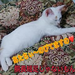 癒しの時間/子猫/ねこらぶ ムギっぺ♡  大きくなったよ あたちぃ〜…
