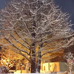 冬の1枚/冬の景色/吹雪の後/雪の花/冬 冬の1枚。 吹雪の後の木には、雪の花が咲…