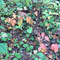 風景/落葉/山の秋/秋 秋の一枚。 黄色や赤など、落葉も鮮やかで…