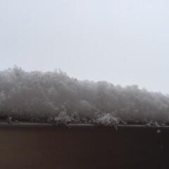 今日の空/曇り/雪/雪かき/ベランダの柵/冬 今日の空。 曇り空から降ってくるのは、雪…